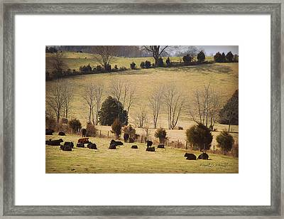 Steers In Rolling Pastures - Kentucky Framed Print by Paulette B Wright