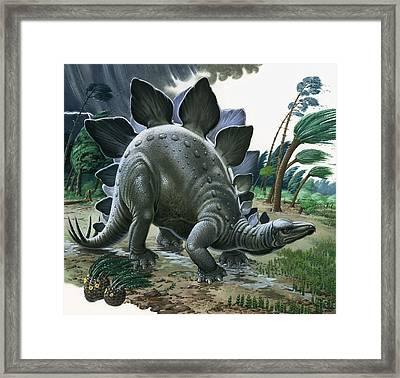 Stegosaurus Framed Print by English School