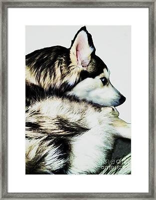 Stella Framed Print by Linda Simon