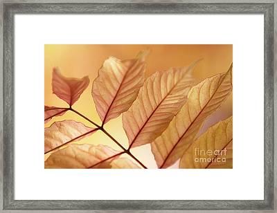 Stems Framed Print by Andrew Brooks