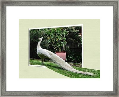 Step Into My Garden Framed Print by Kaye Menner