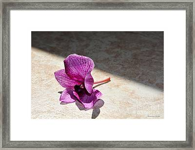 Still Beautiful Framed Print by Ramona Matei