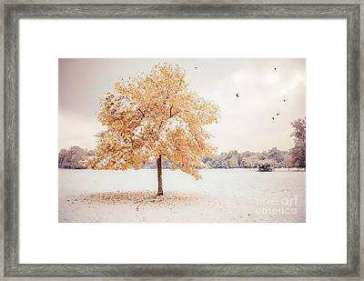 Still Dressed In Fall Framed Print by Hannes Cmarits