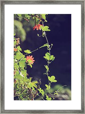 Still Holding On Framed Print by Laurie Search