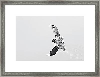 Still Hunter Framed Print by Scott Pellegrin