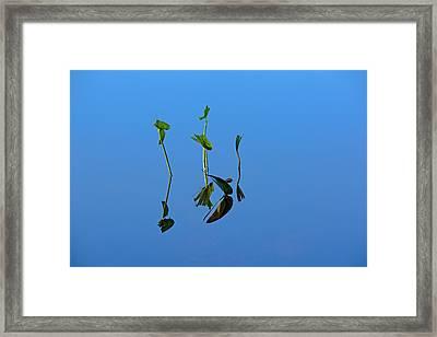 Still Framed Print by Karol Livote