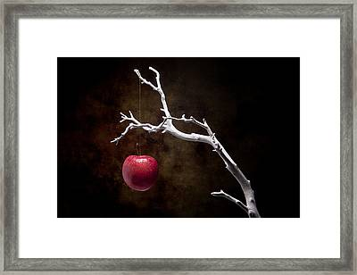 Still Life Apple Tree Framed Print by Tom Mc Nemar