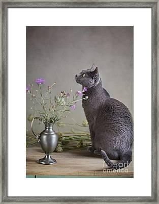 Still Life With Cat Framed Print by Nailia Schwarz