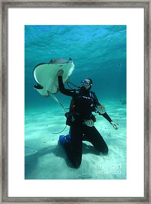 Stingray City Framed Print by Aaron Whittemore