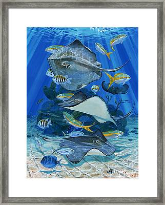 Stingray City Re0011 Framed Print by Carey Chen