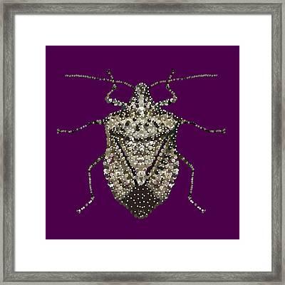 Stink Bug Bedazzled Framed Print by R  Allen Swezey