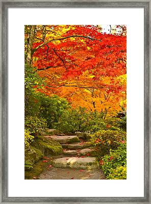 Stone Steps In A Forest In Autumn Framed Print by Panoramic Images