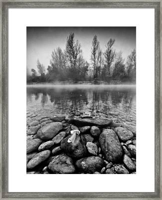 Stones And Trees Framed Print by Davorin Mance