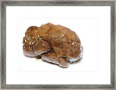 Stool Sample For Faecal Transplantation Framed Print by Louise Murray