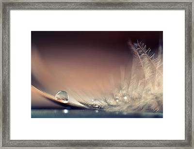 Stories Of Drops Framed Print by Dmitry.d