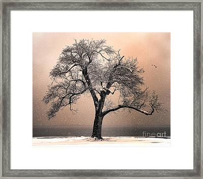 Stories To Tell Framed Print by Betty LaRue