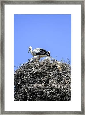 Storks Nesting Framed Print by Photostock-israel