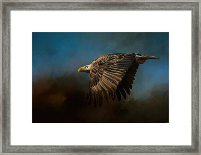 Storm Chaser - Bald Eagle Framed Print by Jai Johnson