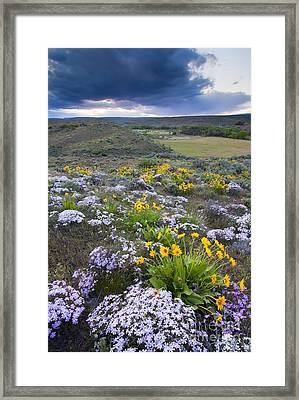 Storm Over Wildflowers Framed Print by Mike  Dawson