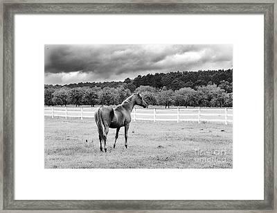 Stormy Pasture Framed Print by Scott Hansen