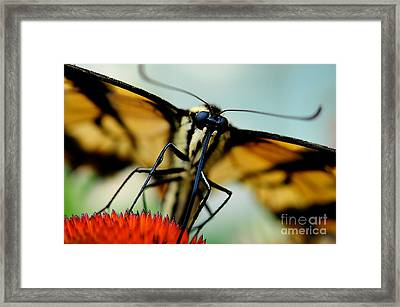 Straight On For You Framed Print by Lois Bryan