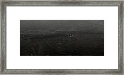 Stranded Framed Print by Chase Poore