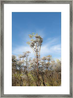 Strands Of Silver Framed Print by Ben Thompson