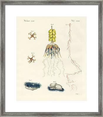 Strange Comb Jellies Framed Print by Splendid Art Prints