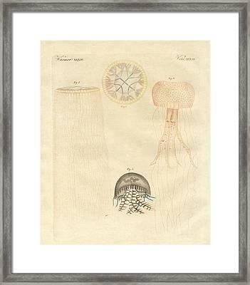 Strange Medusas Framed Print by Splendid Art Prints