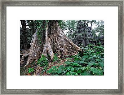Strangler Fig Tree Roots On The Ancient Preah Khan Temple Framed Print by Sami Sarkis