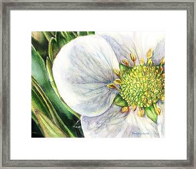Strawberry Blossom Framed Print by Shana Rowe Jackson