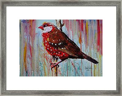 Strawberry Finch Framed Print by Isabel Salvador