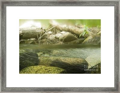 Stream Riffle Habitat Framed Print by William H. Mullins