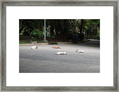 Street Dog - Phuket Thailand - 01131 Framed Print by DC Photographer