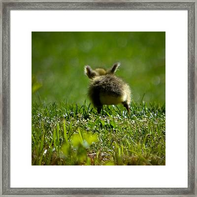 Stretch Your Wings Framed Print by Mary Zeman
