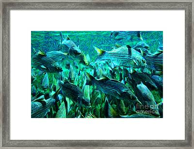 Striped Bass - Painterly V1 Framed Print by Wingsdomain Art and Photography