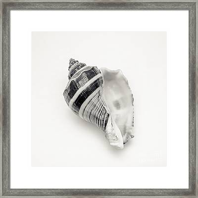 Striped Sea Shell 2 Framed Print by Lucid Mood