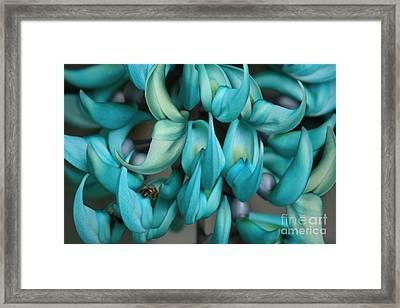 Strongylodon Macrobotrys - Seagreen Blue Jade Vine Framed Print by Sharon Mau