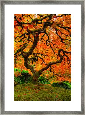 Structured Beauty Framed Print by Dustin  LeFevre