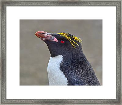 Stuck A Feather In His Hat Framed Print by Tony Beck