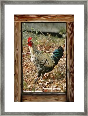 Studio Window Rooster Framed Print by Barbara St Jean
