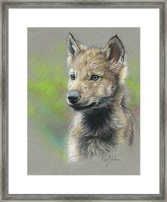 Study - Baby Wolf Framed Print by Lucie Bilodeau