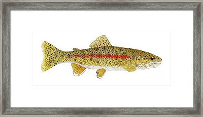Study Of A Columbia River Erdband Trout Framed Print by Thom Glace