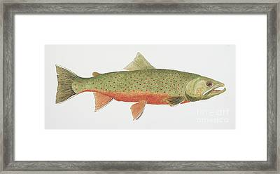 Study Of A Male Dolly Varden Char Framed Print by Thom Glace