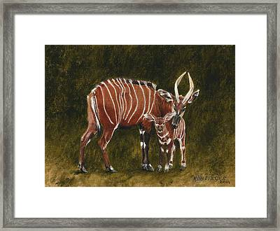 Study Of A Mountain Bongo Framed Print by Rob Dreyer AFC