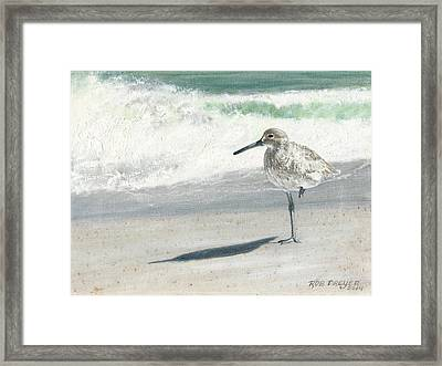 Study Of A Sandpiper Framed Print by Rob Dreyer AFC