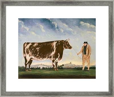 Study Of A Shorthorn Framed Print by William Joseph Shayer