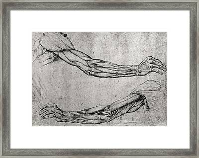 Study Of Arms Framed Print by Leonardo Da Vinci
