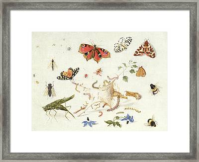 Study Of Insects And Flowers Framed Print by Ferdinand van Kessel