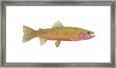 Study Of The Greenback Cutthroat Framed Print by Thom Glace